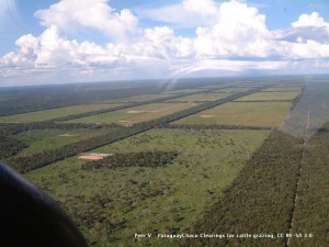 ParaguayChaco_Clearings_for_cattle_grazing