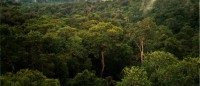 """Amazon Manaus forest"" by Phil P Harris. - Own work. Licensed under CC BY-SA 2.5"