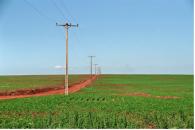 Sojaplantage in Paraguay, Foto: Steffi Holz