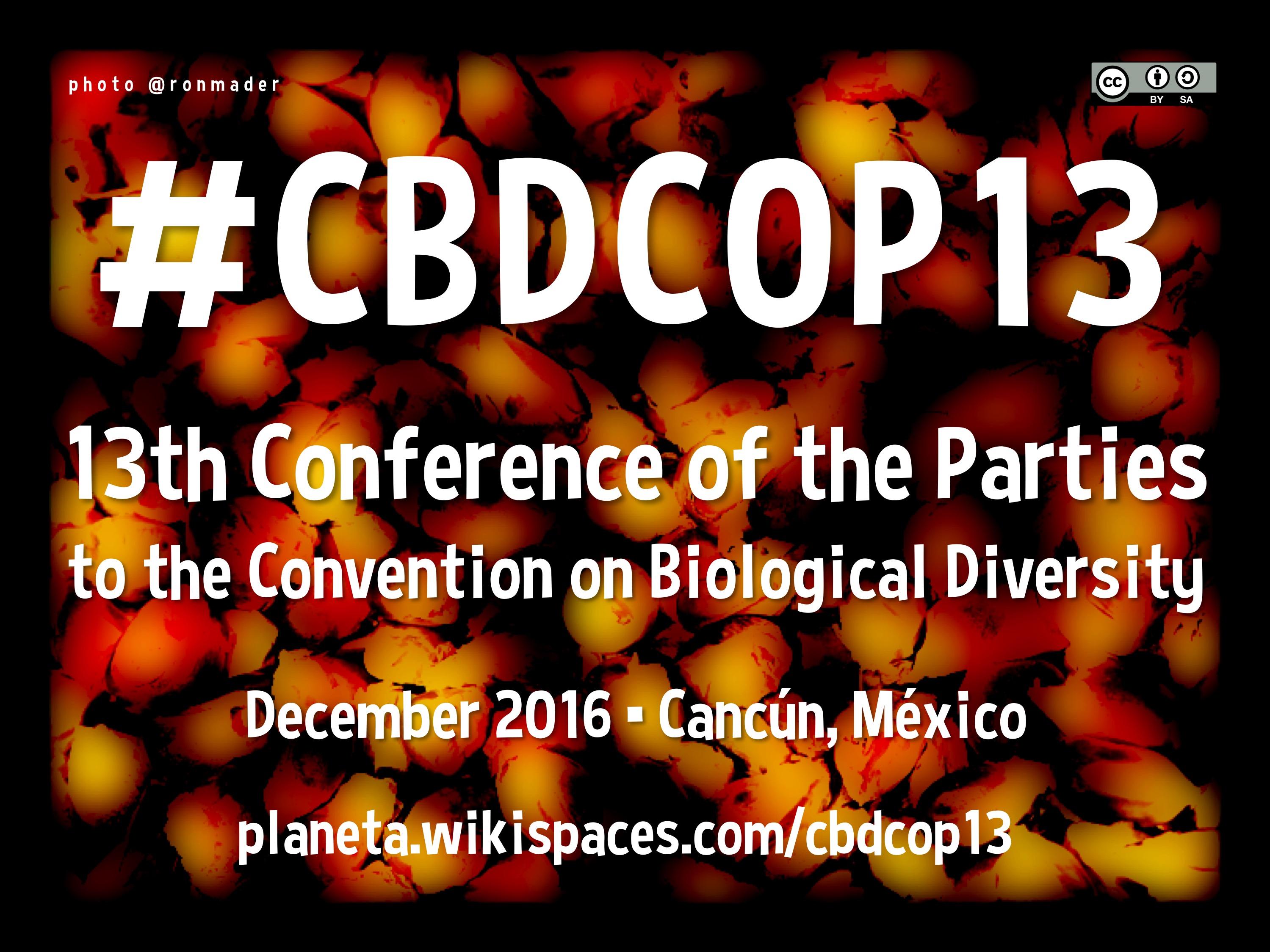#CBDCOP13