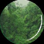 Foto: Regenwald in Costa Rica_Quelle m.prinke_CC BY SA 2.0